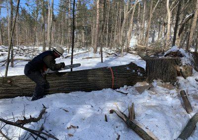 CuttingAmerican Chestnut Logs 1A