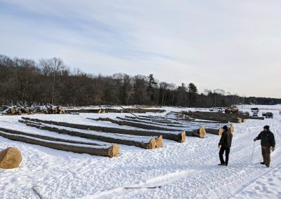 Log yardAmerican Chestnut Logs 4