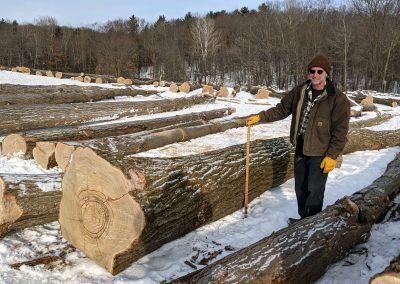 LogYardAmerican Chestnut Logs 3