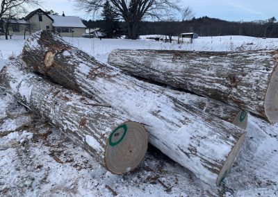 Logyard American Chestnut Logs 6