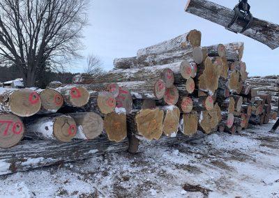 Logyard American Chestnut Logs 9