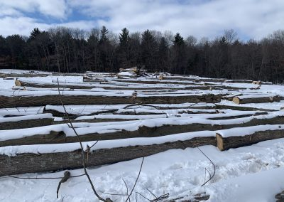 LogyardAmerican Chestnut Logs 5