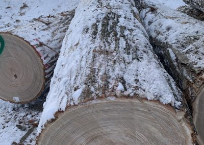 LogyardAmerican Chestnut Logs 8
